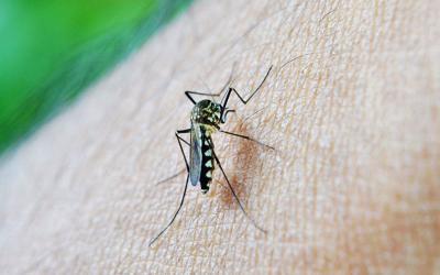 Εφαρμογή προγράμματος καταπολέμησης κουνουπιών σε περιοχές του Δ. Αλμυρού