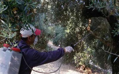 Δολωματικοί ψεκασμοί για την καταπολέμηση του δάκου σε Σούρπη, Πτελεό, Αχίλλειο, Αγ. Θεοδώρους