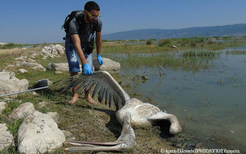 Τα φυτοφάρμακα σκότωσαν τα πουλιά το καλοκαίρι στη λίμνη Κάρλα.