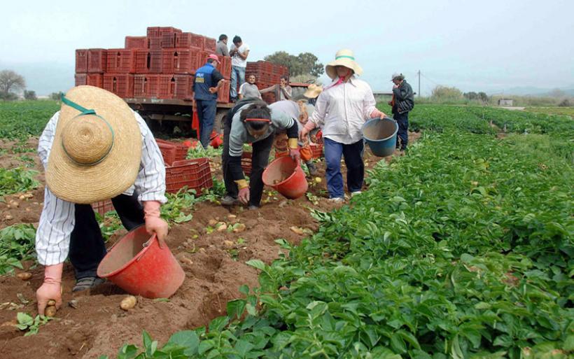 «Ντου» ελεγκτών στα χωράφια της Μαγνησίας - Ψάχνουν για ανασφάλιστους αλλοδαπούς εργάτες γης