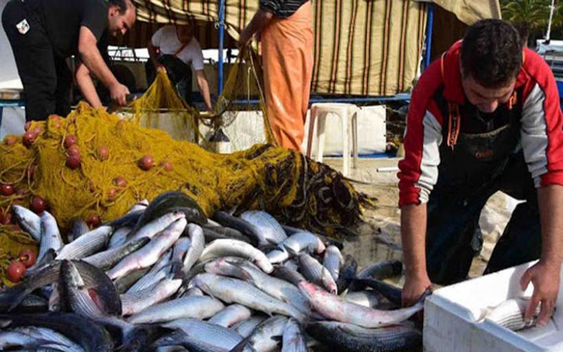 Aυτό θα πει καλή ψαριά: Τα καΐκια γέμισαν με 2 τόνους κέφαλους(vid)