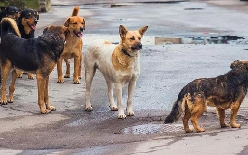 Αδέσποτος σκύλος επιτέθηκε σε 63χρονη στον Αλμυρό