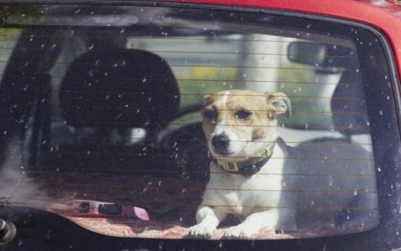 Άφησε τον σκύλο του να πεθάνει στη ζέστη του αυτοκινήτου -Κοντά στο ΣΕΑ Σούρπης