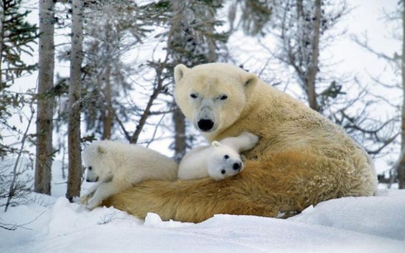 Κατά 95% έχουν μειωθεί τα άγρια ζώα μέσα σε 123 χρόνια