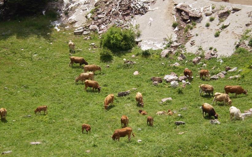 Ενημέρωση Κατανομής και Οφειλών Βοσκήσιμων Γαιών Περιφέρειας Θεσσαλίας για το έτος 2017
