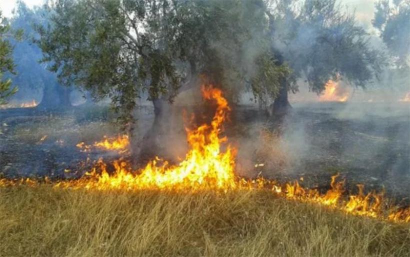 Αλμυρός: Φωτιά έκαψε τρία στρέμματα με ξερά χόρτα