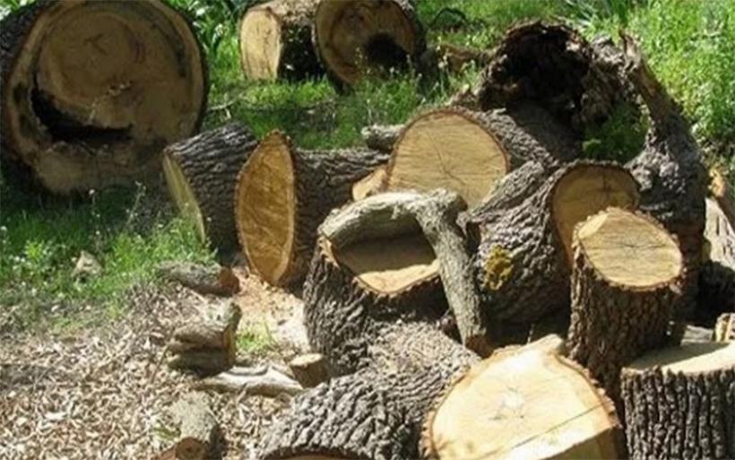 Λαθροϋλοτομίες εντόπισε η Διεύθυνση Δασών Μαγνησίας- Δέχεται καταγγελίες από πολίτες