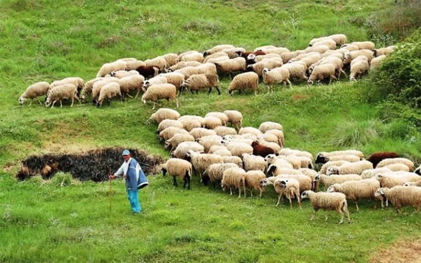 Καταγγελίες κτηνοτρόφων της Μαγνησίας για ελληνοποιήσεις γάλακτος – Ζητούν εντατικότερους ελέγχους