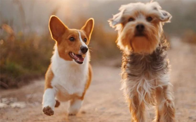 Καταρρίπτεται ο μύθος ότι ένα... σκυλο-έτος ισοδυναμεί με επτά ανθρώπινα χρόνια -Πώς υπολογίζονται