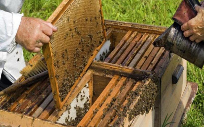 Αρπαξαν 43 μελισσοσμήνη παραγωγού στην Γαύριανη Πτελεού