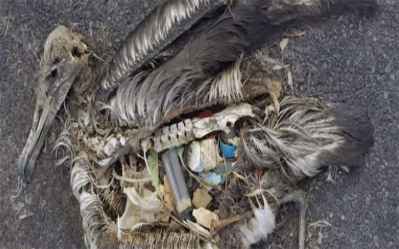 «Selfish»: Η ταινία μικρού μήκους για τη ρύπανση με πλαστικό που σαρώνει τα βραβεία