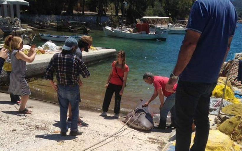 Τέταρτος καρχαρίας στα δίχτυα Ελλήνων ψαράδων μέσα σε ένα μήνα