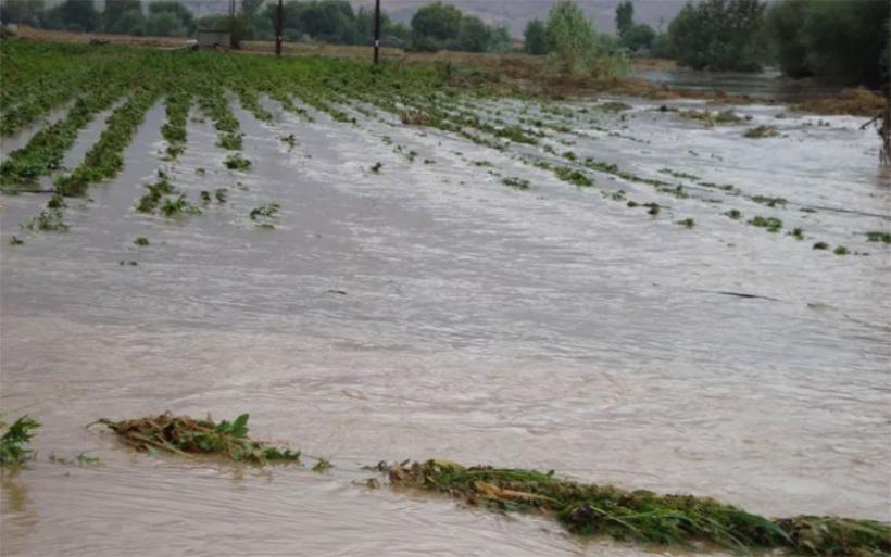 Βαμβακοπαραγωγοί σε απόγνωση στον Αλμυρό – Ολοκληρωτική η καταστροφή στα πλημμυρισμένα χωράφια