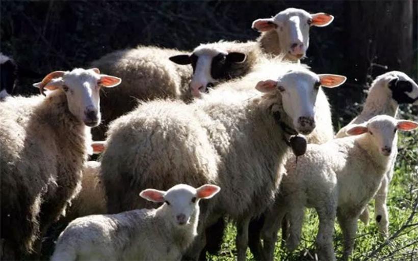 Παράταση προθεσμίας υποβολής αιτήσεων για άδειες κτηνοτροφικής εγκατάστασης και άδειες διατήρησης
