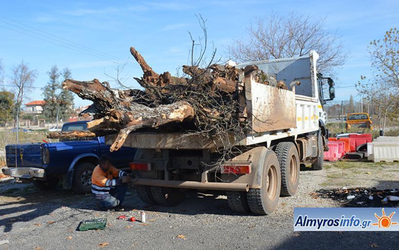 Αθώοι για την παράνομη μεταφορά ξύλων στο «Κουρί»