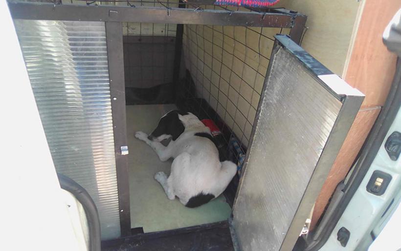 Περισυλλέχθηκε τραυματισμένο αδέσποτο σκυλάκι στο Αϊδίνι