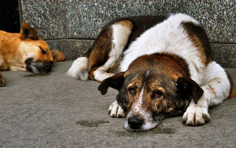 Βόλος: Έδεσαν με πέτρες σκύλο και τον έπνιξαν στον Αναυρο!