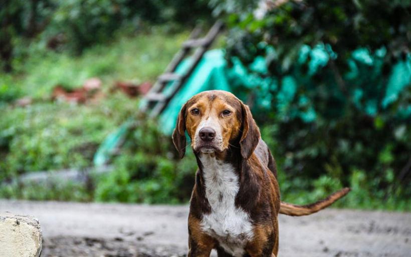 Κτηνιατρικές υπηρεσίες αδέσποτων ζώων για την πόλη και χωριά του Αλμυρού