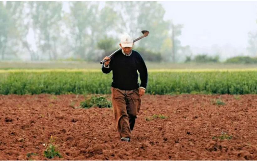 Αγωνία στους αγρότες της Μαγνησίας για ζημιές σε καλλιέργειες λόγω των χαμηλών θερμοκρασιών
