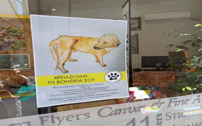 Οι πανέμορφοι σκύλοι από το καταφύγιο του Αλμυρού … κυκλοφόρησαν σε μπλούζες και αφίσες