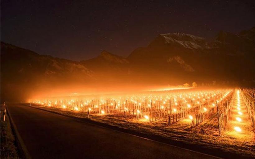 Με φωτιές προστατεύουν οι Ελβετοί τα αμπέλια τους από τον παγετό