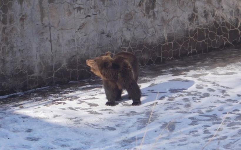 Νευροκόπι: Έσωσαν αρκούδα που εγκλωβίστηκε σε υδατοδεξαμενή