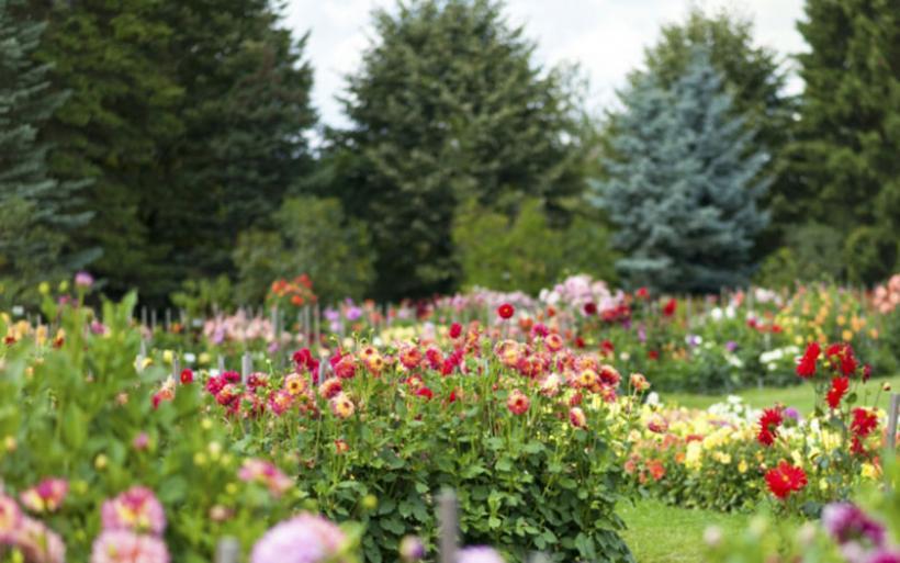 Μνημόνιο συνεργασίας για βοτανικό κήπο στην Όθρυ