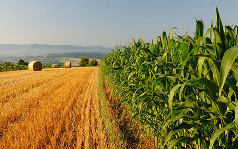 Μέχρι 31 Οκτωβρίου αίτηση επιστροφής ΦΠΑ σε αγρότες του ειδικού καθεστώτος