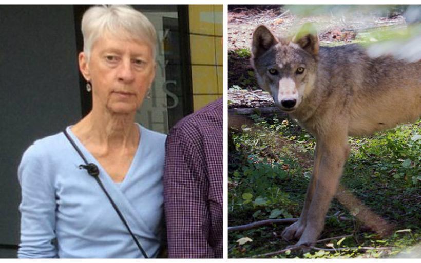 Νέα στοιχεία: Λύκοι κατασπάραξαν την άτυχη Βρετανίδα στη Ροδόπη