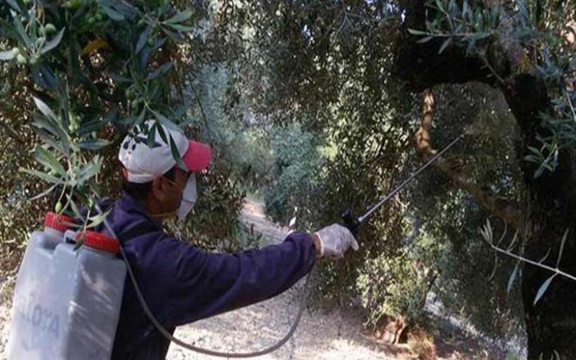 Πρόγραμμα διενέργειας δολωματικών ψεκασμών για τον δάκο σε Πτελεό και Αγ. Θεοδώρους