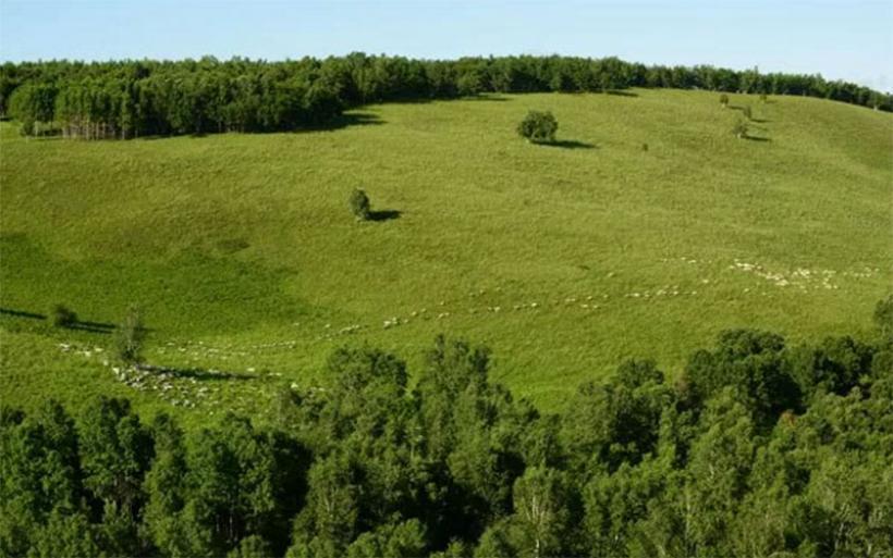 Ανακοίνωση της Διεύθυνσης Δασών Μαγνησίας για τις αντιρρήσεις στους δασικούς χάρτες