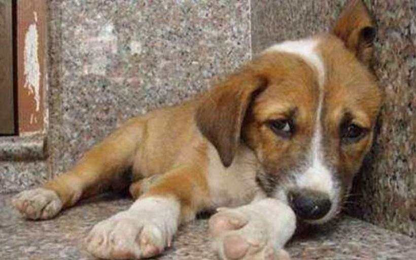 Υψηλά τα ποσοστά κακοποίησης ζώων στην Ελλάδα - Τι δείχουν τα στοιχεία