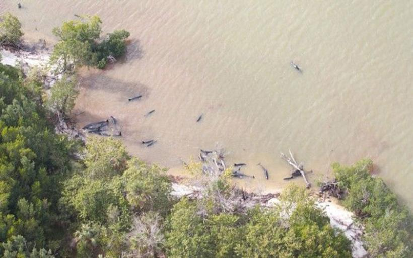 Δεκάδες δελφίνια νεκρά στις ακτές της Φλόριντα