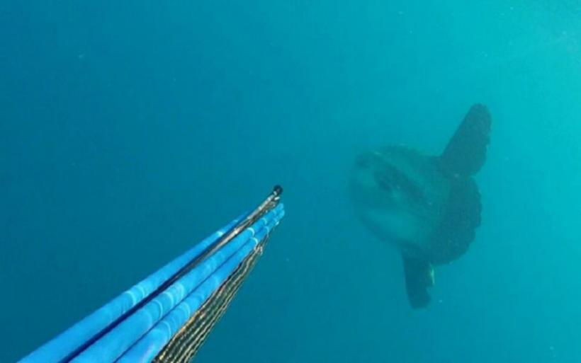 Λάρισα: Τρόμος στον βυθό για ψαροντουφεκά - Η στιγμή που τεράστιο ψάρι έρχεται κατά πάνω του