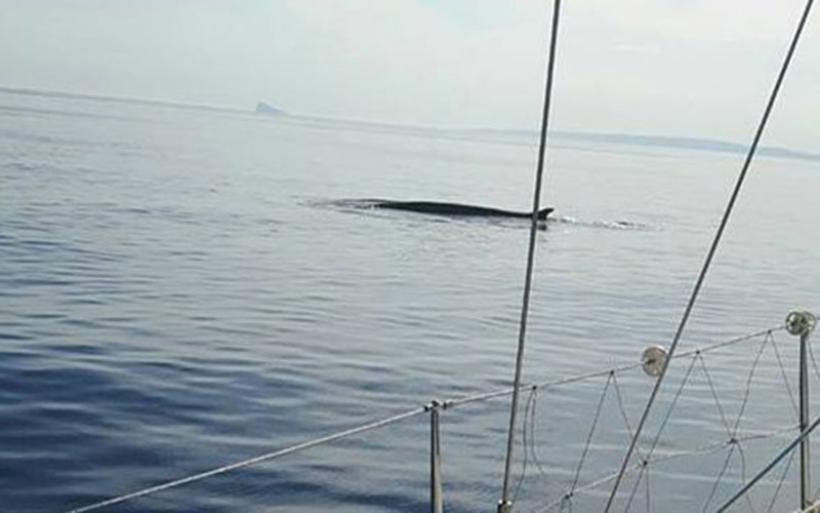 Σύρος: Είδαν μπροστά τους μια φάλαινα 12 μέτρων!
