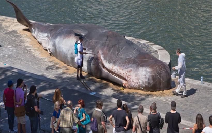 Γαλλία: 16 κιλά πλαστικών βρέθηκαν στην κοιλιά μιας ραμφοφάλαινας