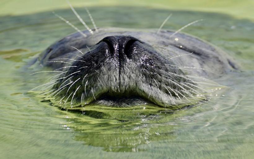 Ρωσία: 150 φώκιες νεκρές σε παραλία της Κασπίας Θάλασσας