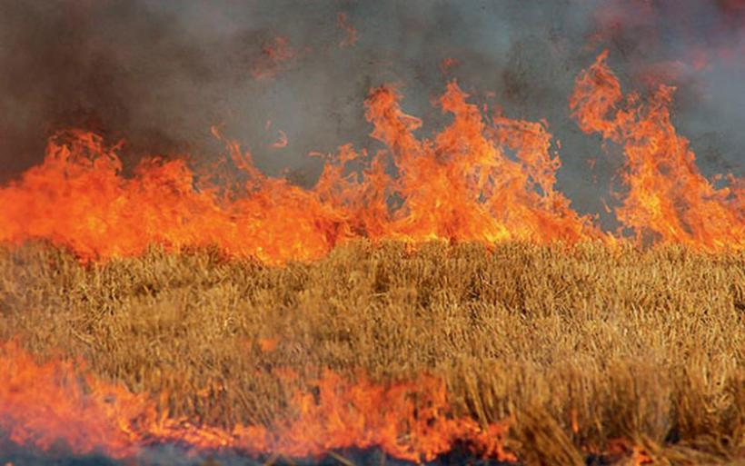 Πυρκαγιά σε χωράφι στον Πλάτανο έκαψε κριθάρι και ελαιόδεντρα