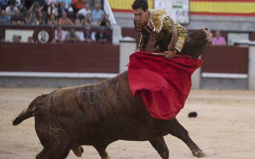 Η εκδίκηση του ταύρου: Δείτε πώς γλιτώνει από θαύμα ο ταυρομάχος