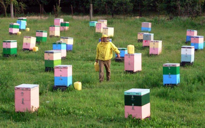 Στο λογιστή για βιβλία ως 30 Γενάρη οι μελισσοκόμοι