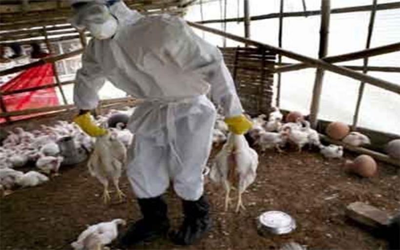 Στο πόδι η Κίνα για τη γρίπη των πτηνών