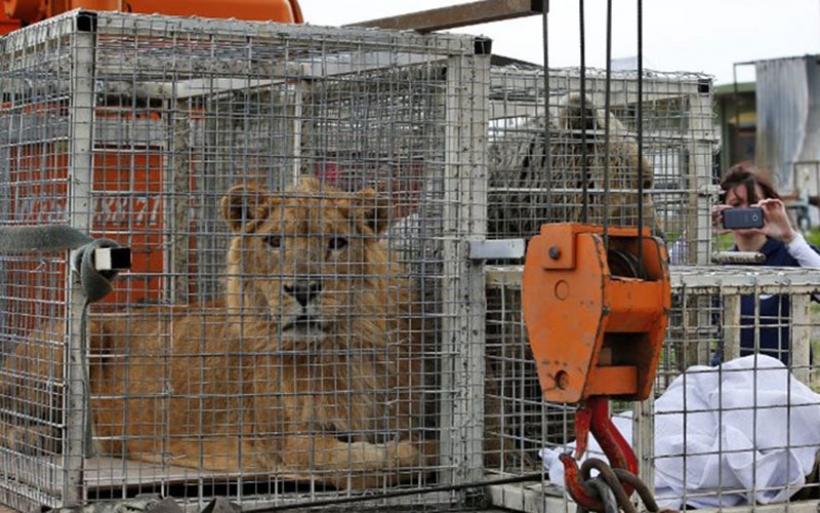 Αυτοί είναι οι πραγματικοί Survivors: Το λιοντάρι και η αρκούδα που επέζησαν στη Μοσούλη