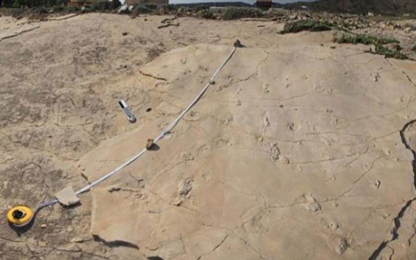 Κίσσαμος: Έκλεψαν ανθρώπινα αποτυπώματα εκατομμυρίων χρόνων