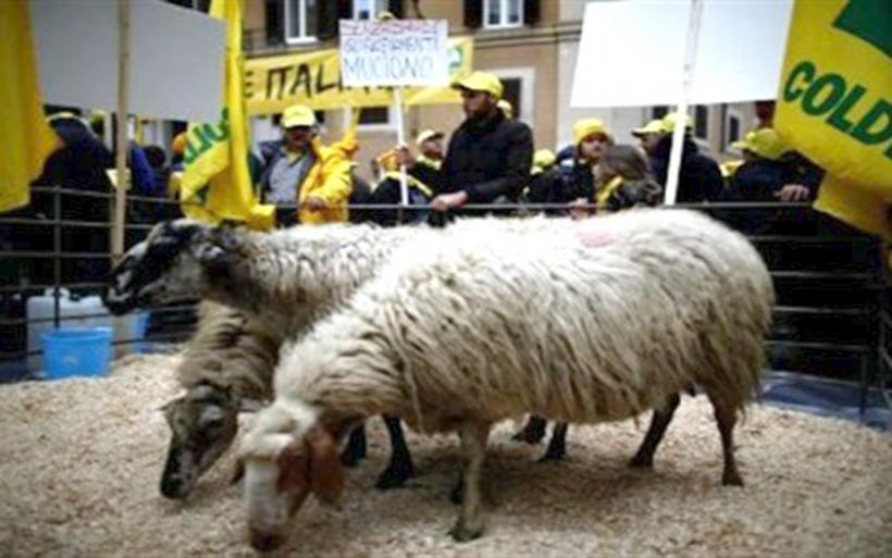 Ιταλοί κτηνοτρόφοι παρέλασαν με πρόβατα στη Ρώμη
