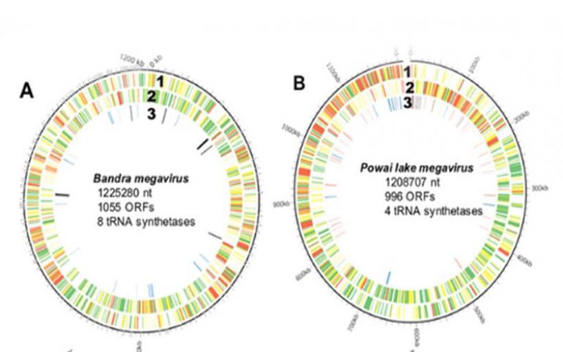 Ανακαλύφθηκαν γιγαντιαίοι ιοί-κλειδί για το μυστήριο της εξέλιξης