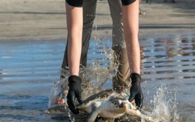 Συνολικά 122 θαλάσσιες χελώνες βρέθηκαν νεκρές σε ακτές του νοτίου Μεξικού