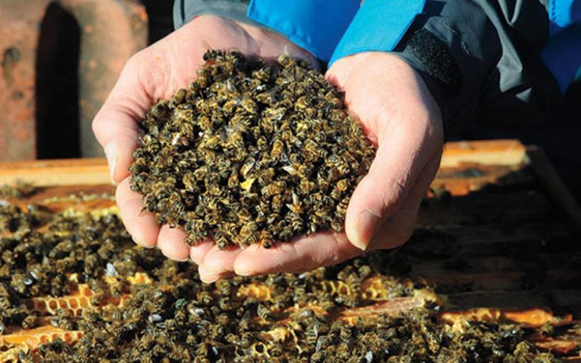 Προστασία των μελισσών απο τους ψεκασμούς και τα φυτοφάρμακα