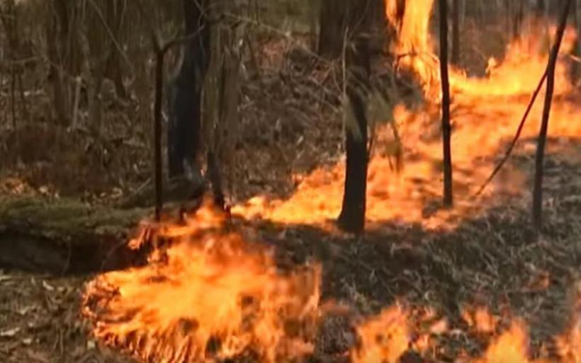 Κομισιόν: Υψηλός κίνδυνος για ασυνήθιστα εκτεταμένες δασικές πυρκαγιές σε όλη την Ευρώπη