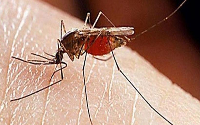 Π.Ε. Μαγνησίας & Σποράδων: Επιβεβλημένη η τήρηση μέτρων προστασίας για τα κουνούπια