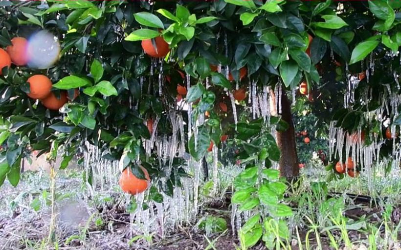 Πάγωσε η Αργολίδα: Κρύσταλλοι πάγου στα πορτοκάλια και πυκνή ομίχλη [βίντεο]